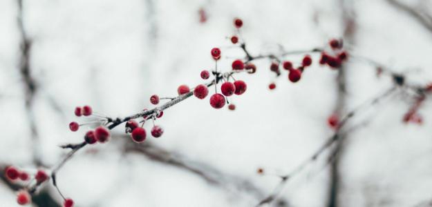 Winterliche Spaziergeh-Routen